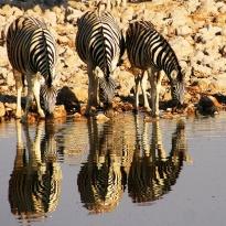 Quelle: www.piqs.de - © Fotograf: adlernest – Titel: Durst