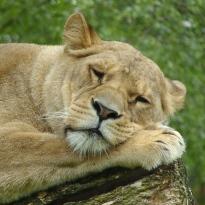 Quelle: www.piqs.de © Fotograf: schlappohr – Titel: ich bin soo müde!