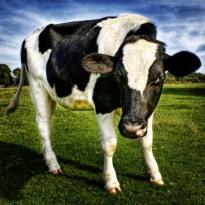 Quelle: www.piqs.de © Fotograf: Steve Arnold – Titel: No, I don´t Got Milk