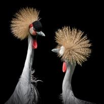 Quelle: www.piqs.de © Fotograf: Ilagam – Titel: …schau mich an, wenn ich mit Dir rede!