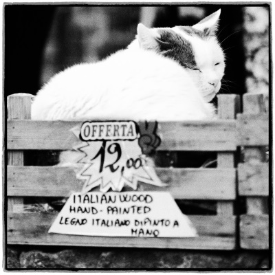 Interim_Management_Blog_Foto_Juergen_Becker_Katze_doesend_Vernazza_2018